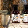 Produit Spicy shark hot maple syrup
